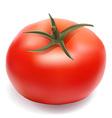 Tomato 001 vector