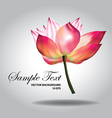 Beautiful pink lotus vector