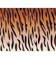 Tiger skin vector