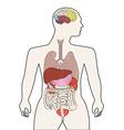 Human body organ vector