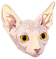 Cat breed sphynx vector