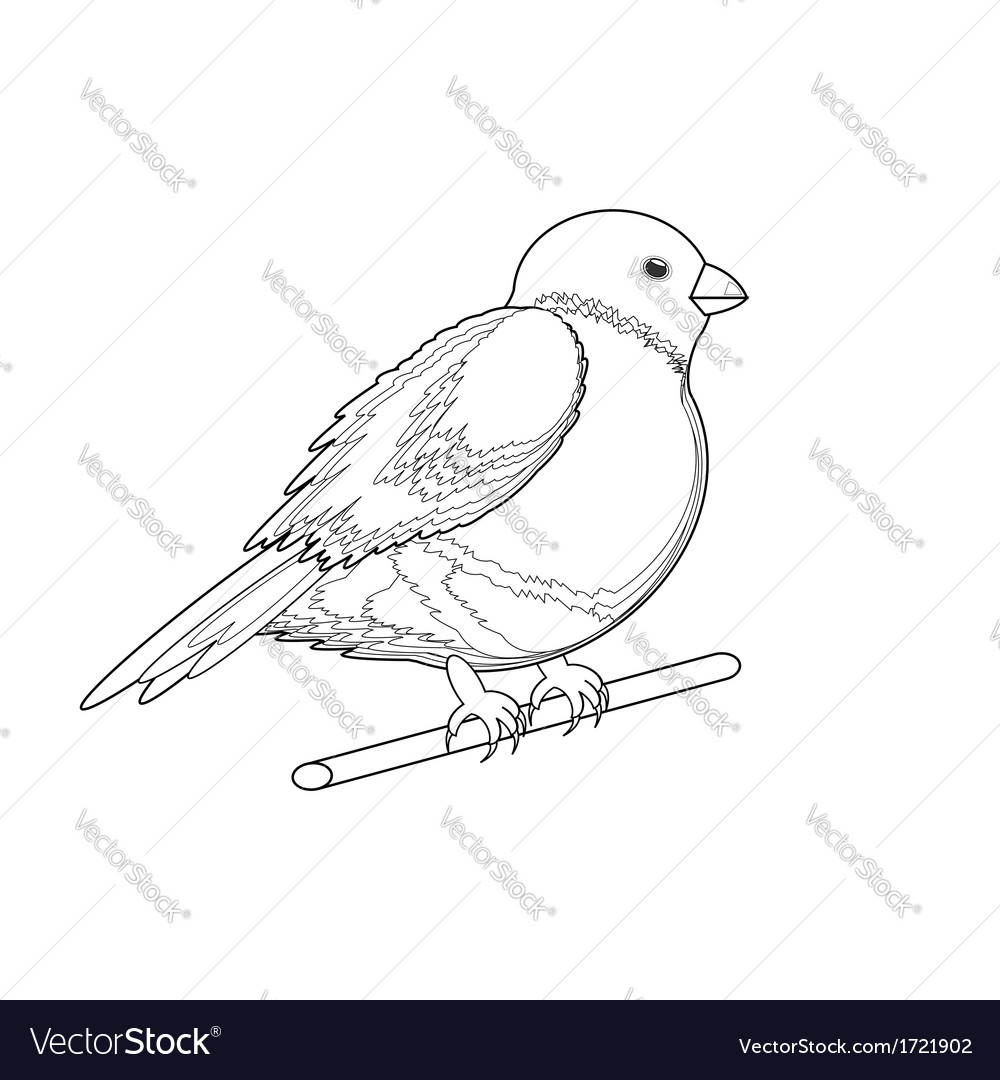 A monochrome sketch of a bird bullfinch vector | Price: 1 Credit (USD $1)