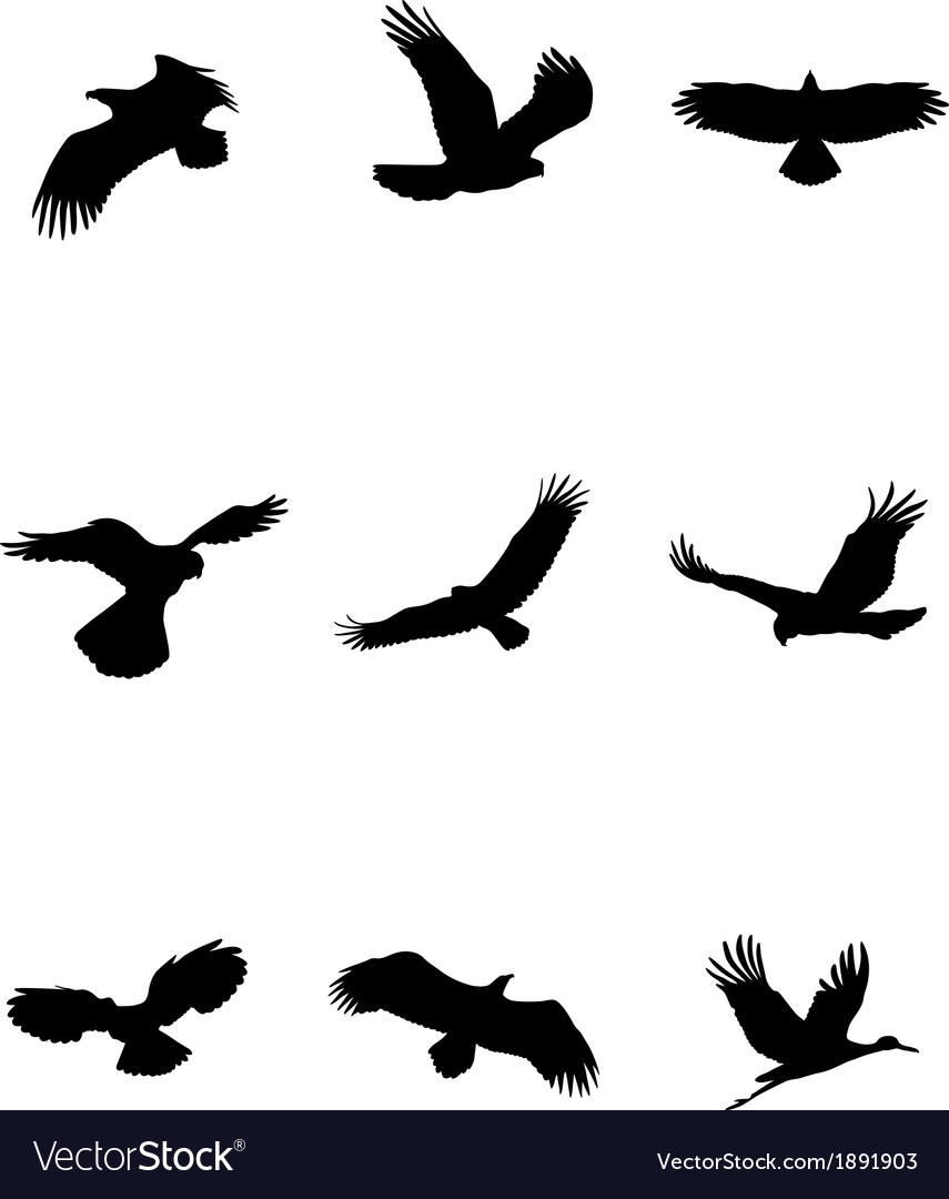 Bird silhouette set vector | Price: 1 Credit (USD $1)