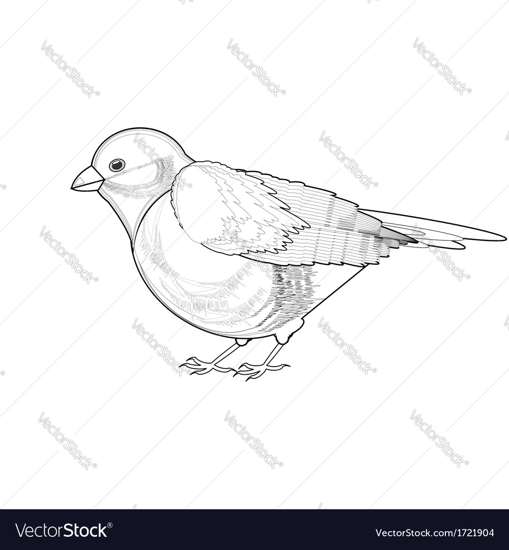 A monochrome sketch of titmouse vector | Price: 1 Credit (USD $1)