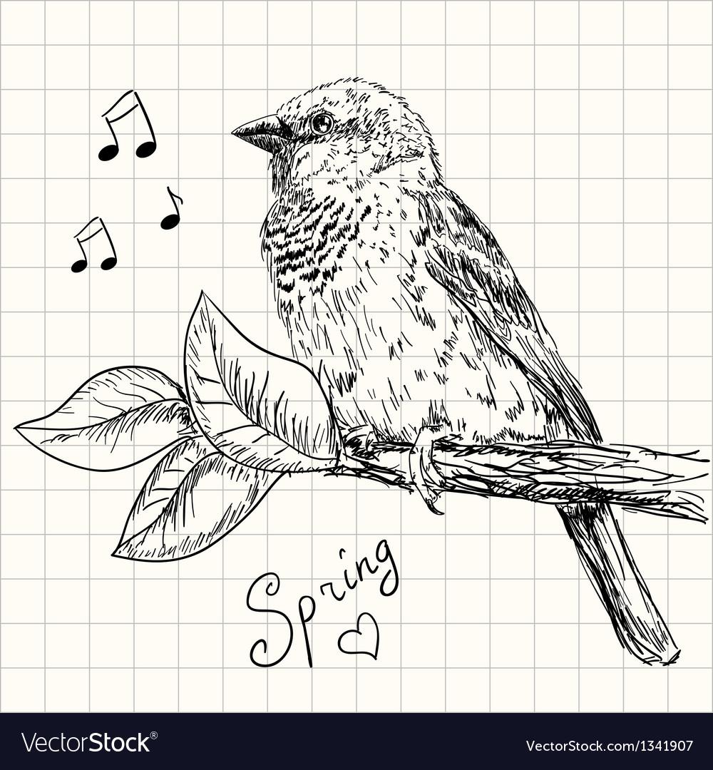 Sparrow vector   Price: 1 Credit (USD $1)
