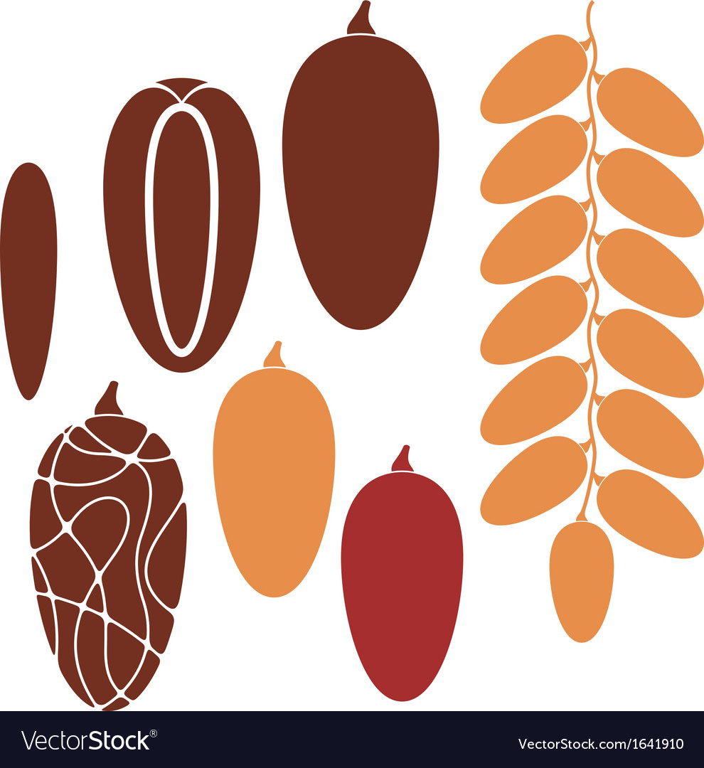Date fruit vector | Price: 1 Credit (USD $1)
