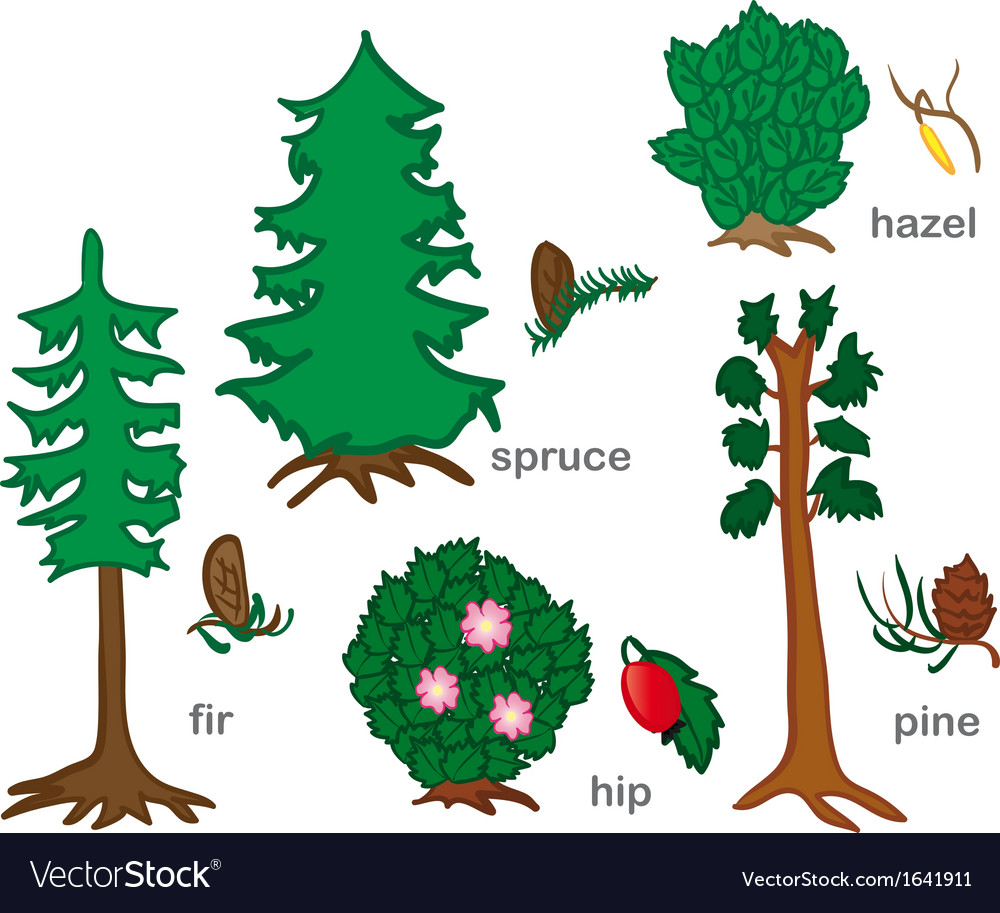 Conifers and shrubs vector | Price: 1 Credit (USD $1)