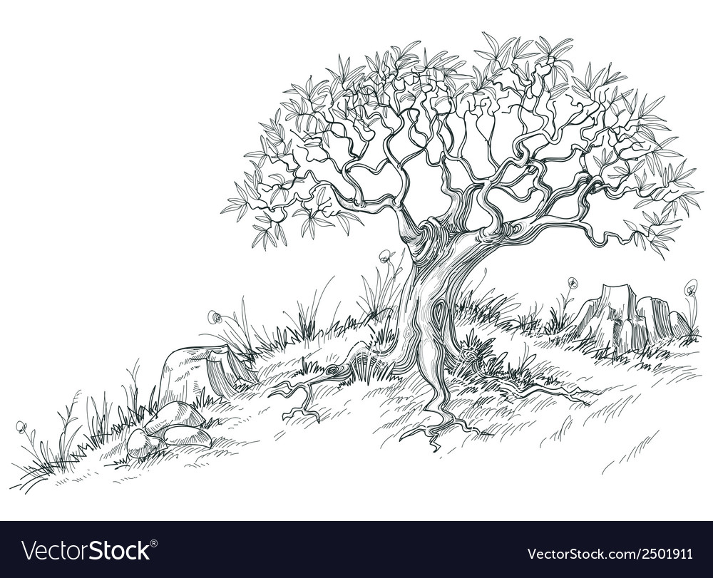 Olive tree graphic vector | Price: 1 Credit (USD $1)