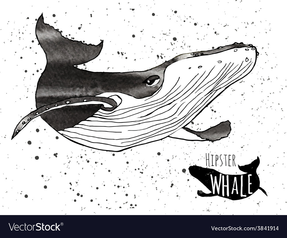 Hand drawn grunge watercolor whale vector | Price: 1 Credit (USD $1)