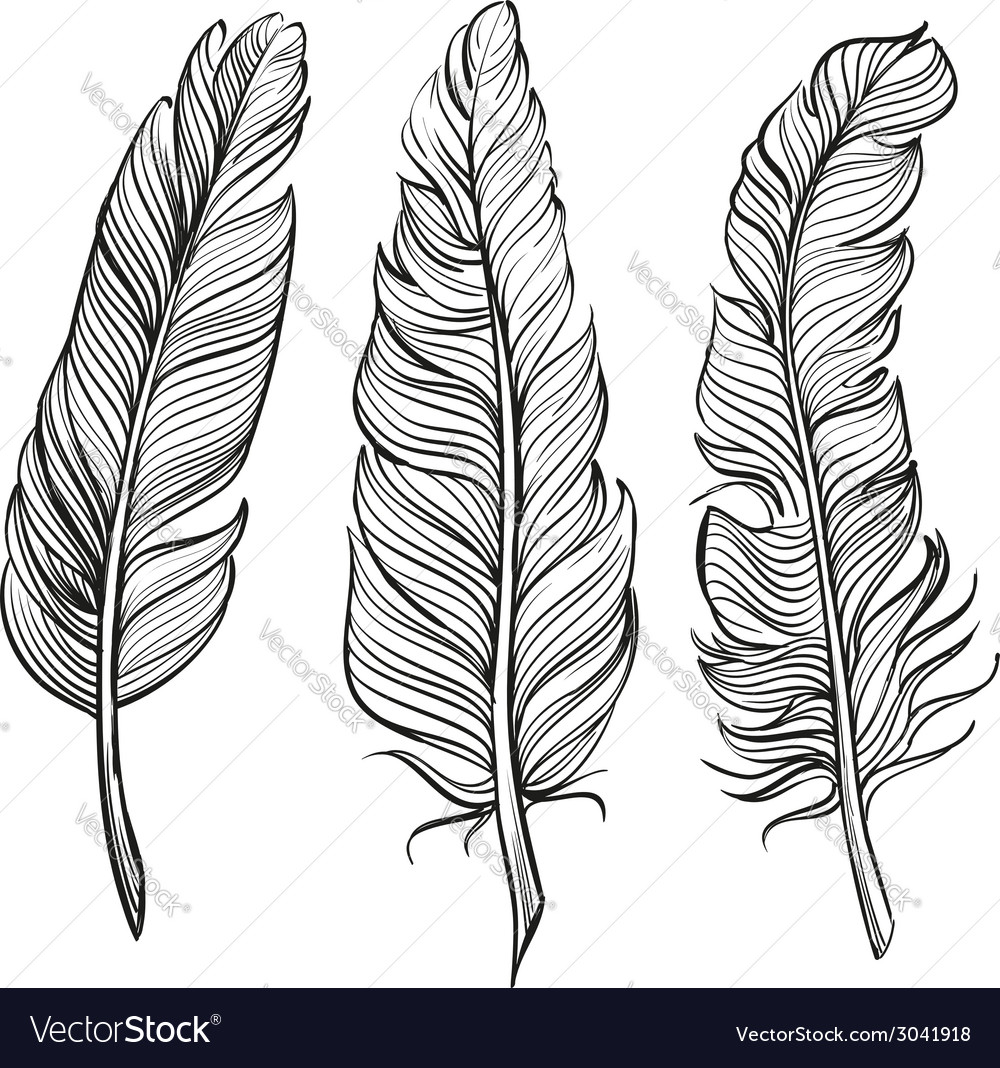 Feathers set hand drawn llustration vector | Price: 1 Credit (USD $1)