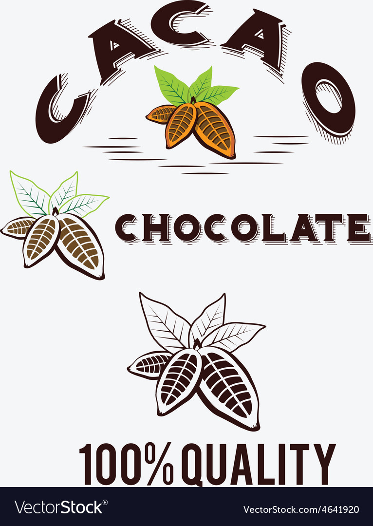 Cacao beans fith leaves vector | Price: 1 Credit (USD $1)