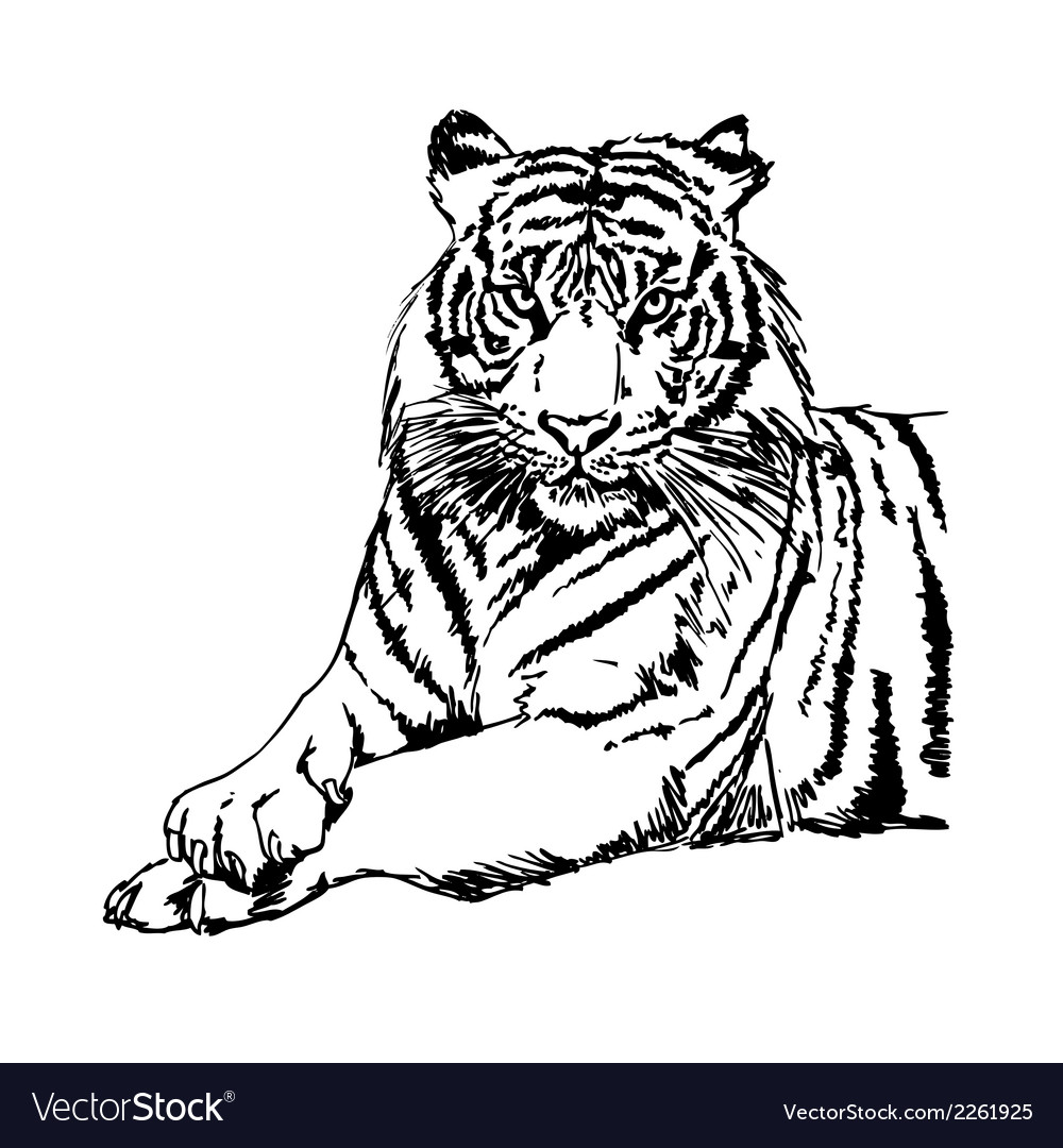 Tigers clipart and stock vector | Price: 1 Credit (USD $1)
