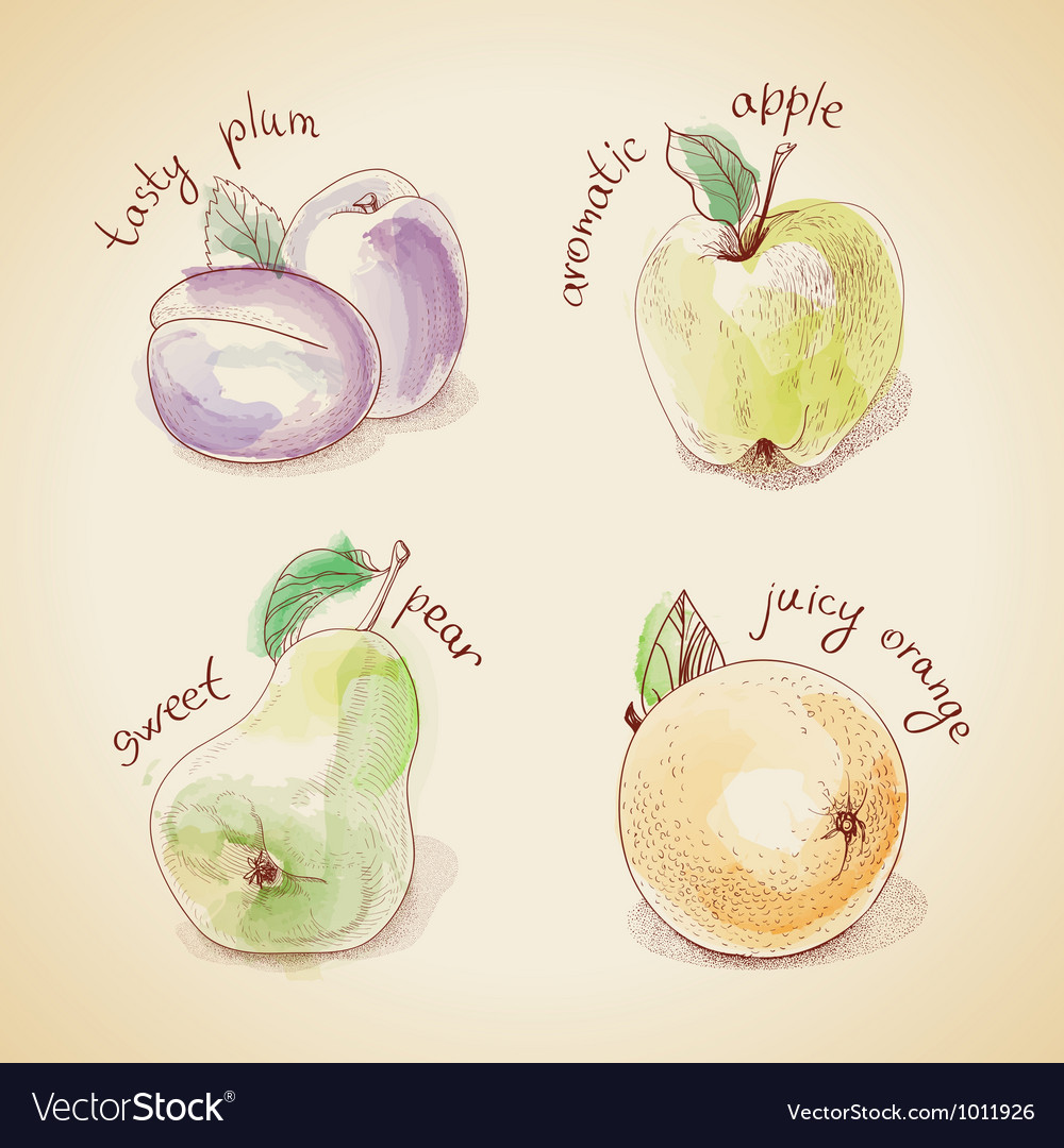 Set of vintage fruit vector | Price: 1 Credit (USD $1)