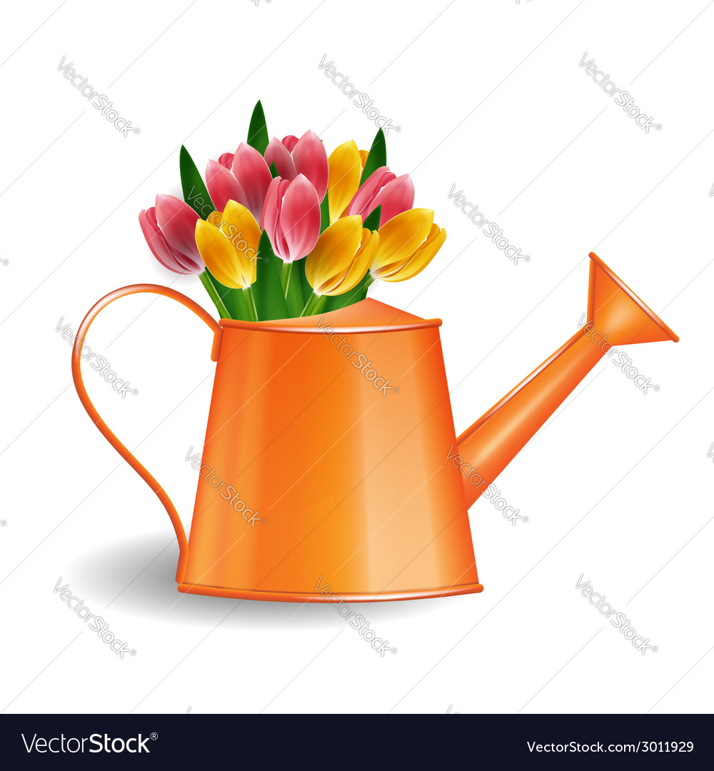 Watering can with bunch of tulips vector | Price: 1 Credit (USD $1)
