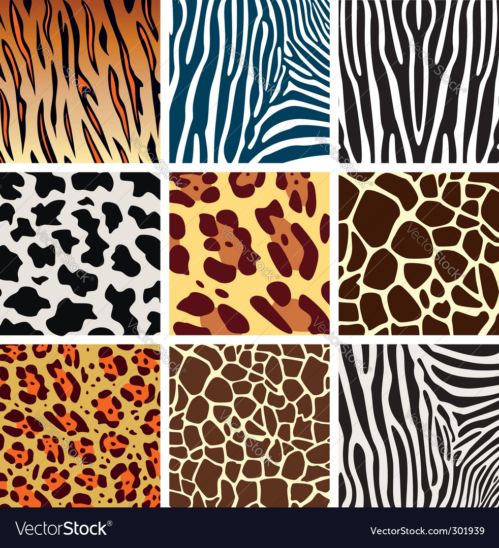 Animal skins vector | Price: 1 Credit (USD $1)