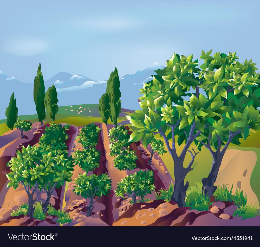 Plantation vector   Price: 5 Credit (USD $5)
