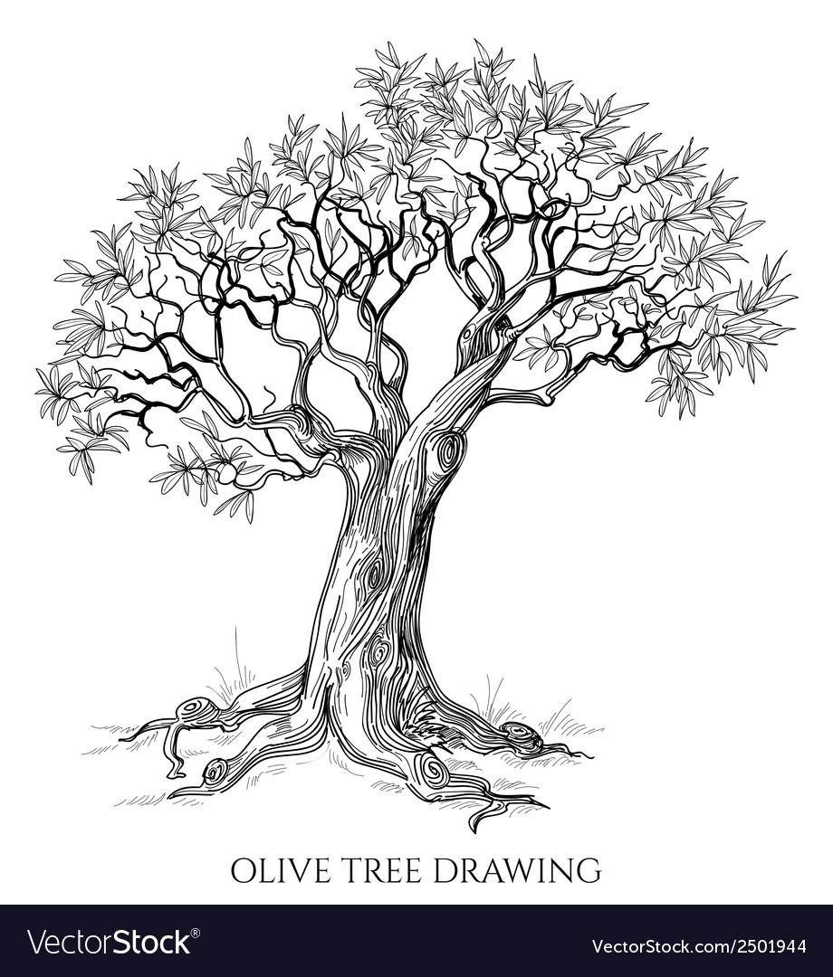Olive tree isolated hand drawn vector | Price: 1 Credit (USD $1)