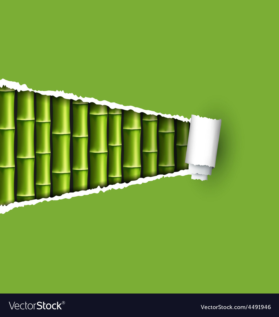 Green bamboo grove with ripped paper frame vector | Price: 1 Credit (USD $1)
