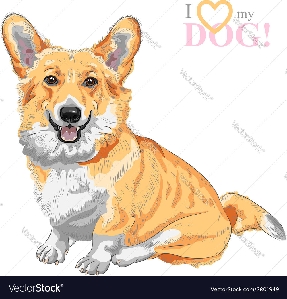 Dog pembroke welsh corgi smiling vector | Price: 1 Credit (USD $1)