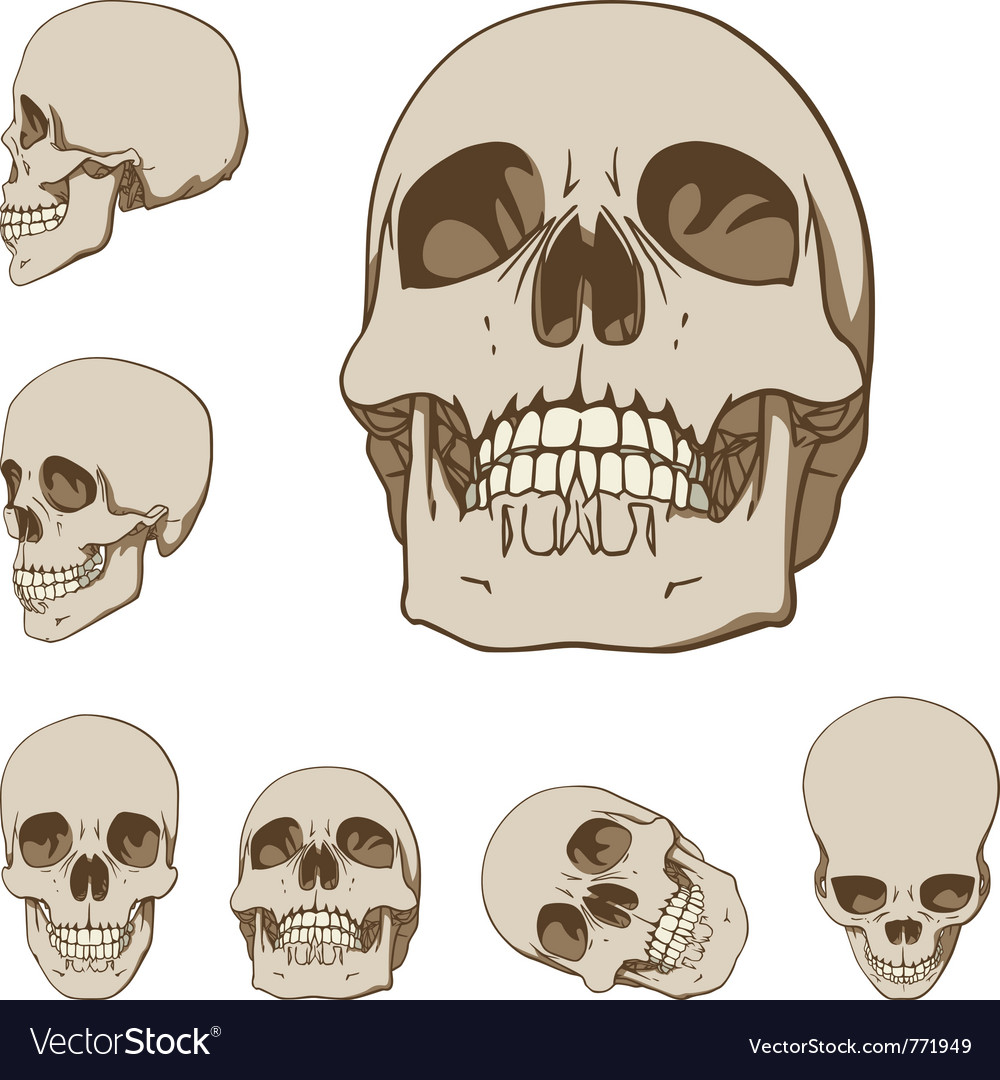 Human skulls set vector | Price: 1 Credit (USD $1)