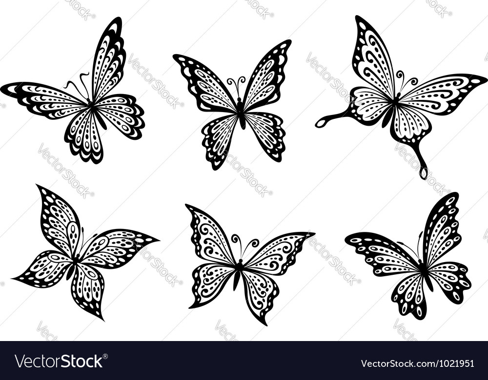 Beautiful butterflies insects vector | Price: 1 Credit (USD $1)