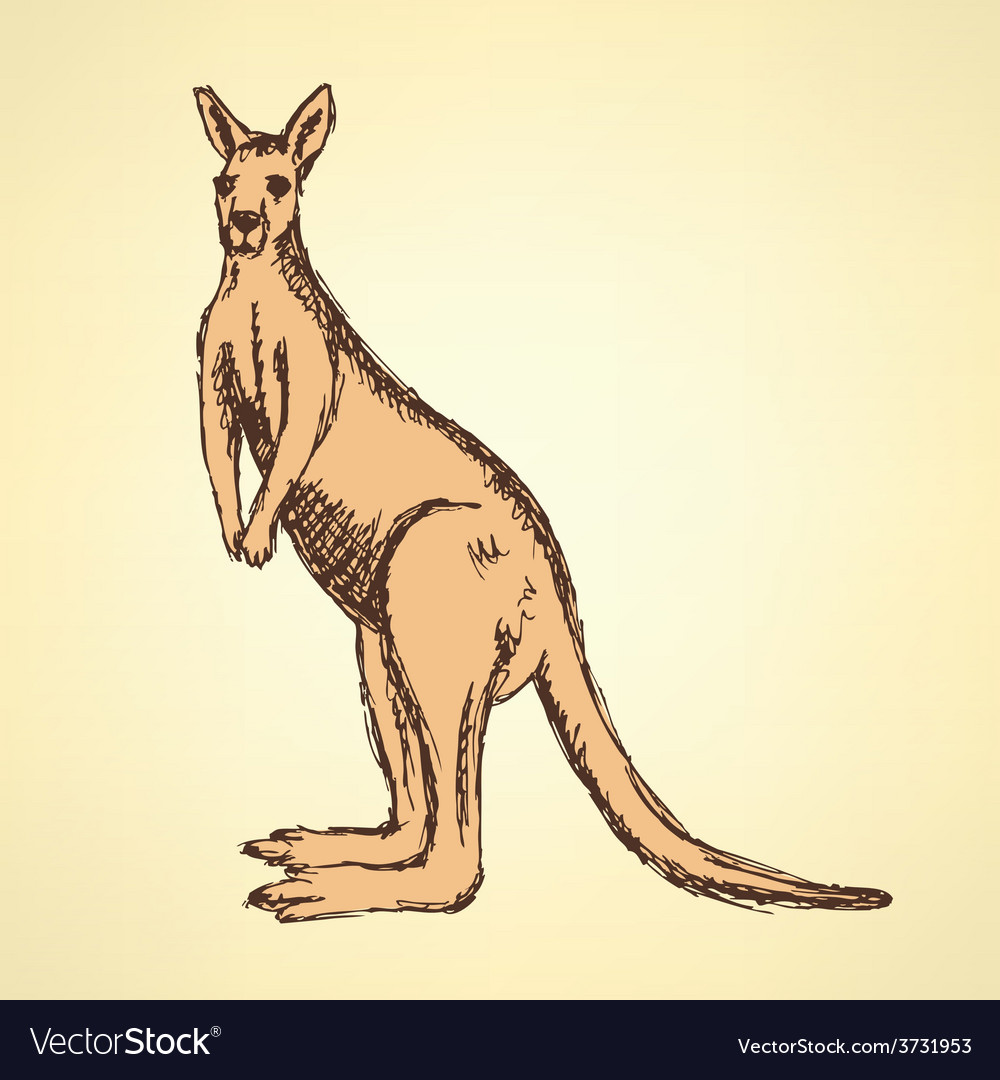Sketch australian kangaroo in vintage style vector | Price: 1 Credit (USD $1)