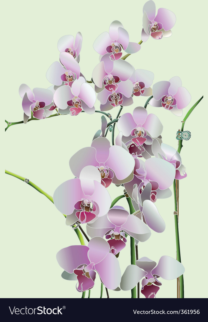Orchids vector | Price: 1 Credit (USD $1)