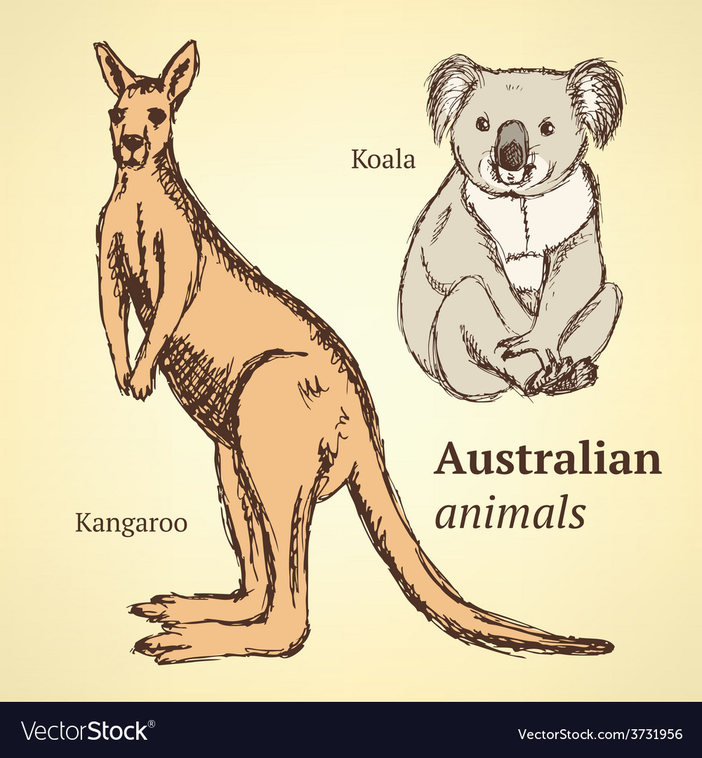 Sketch australian animals in vintage style vector | Price: 1 Credit (USD $1)