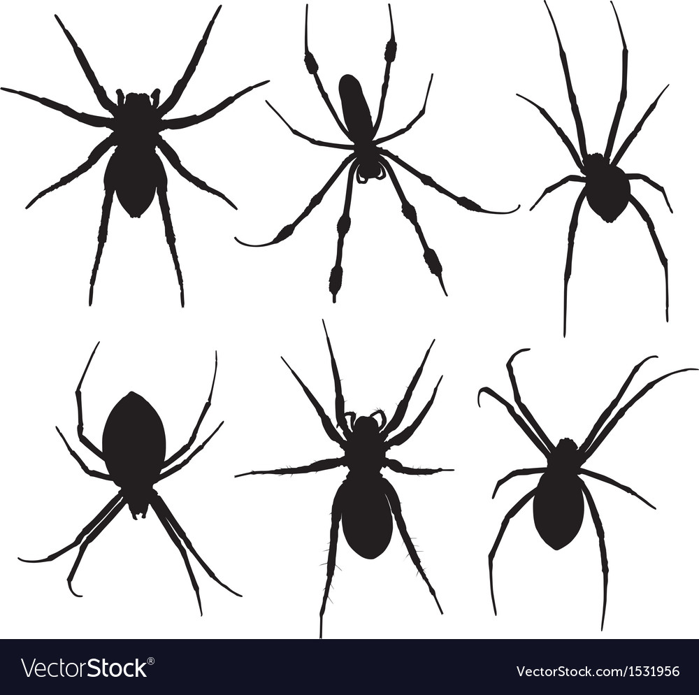 Spider silhouette vector | Price: 1 Credit (USD $1)
