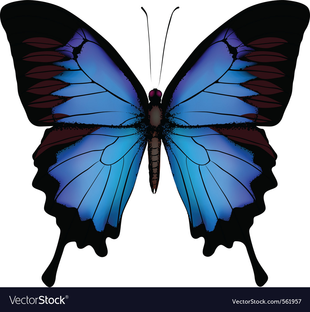 Blue butterfly papilio ulysses mountain swallowtai vector | Price: 1 Credit (USD $1)