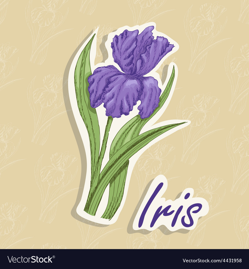 Background with a flower hand drawing of an vector   Price: 1 Credit (USD $1)
