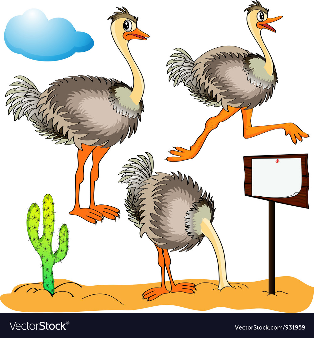 Ostrich cartoon vector | Price: 1 Credit (USD $1)