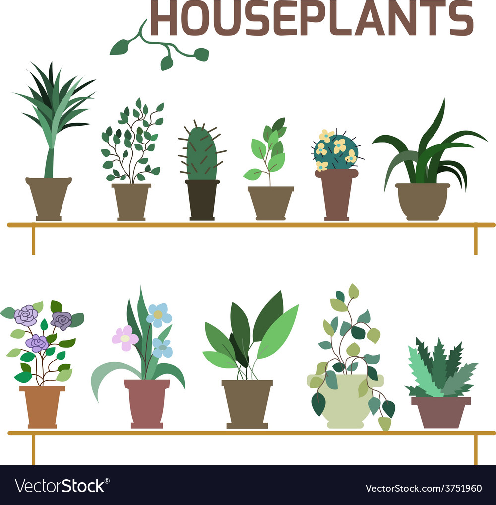Set of indoor plants in pots vector | Price: 1 Credit (USD $1)