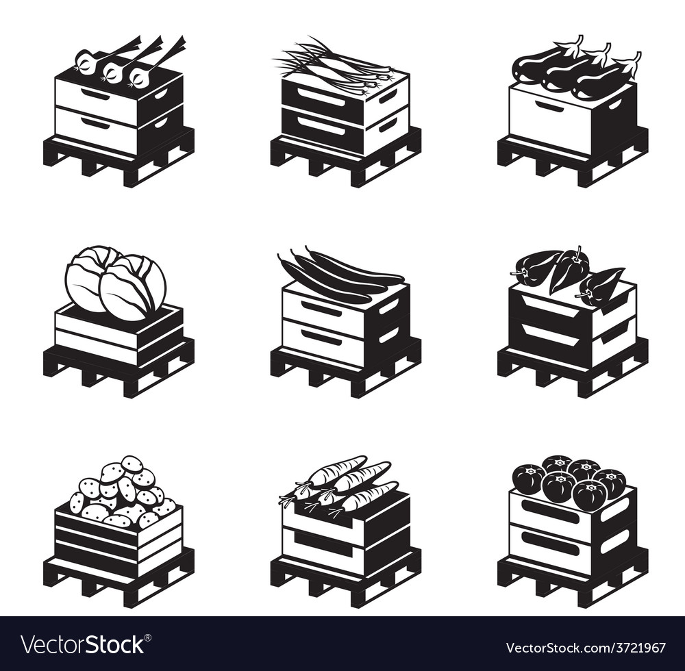 Pallets with vegetables vector