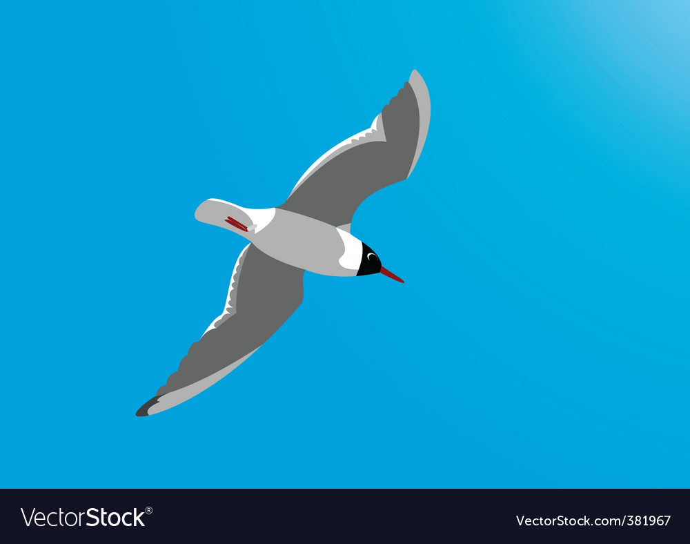 Seagull vector | Price: 1 Credit (USD $1)