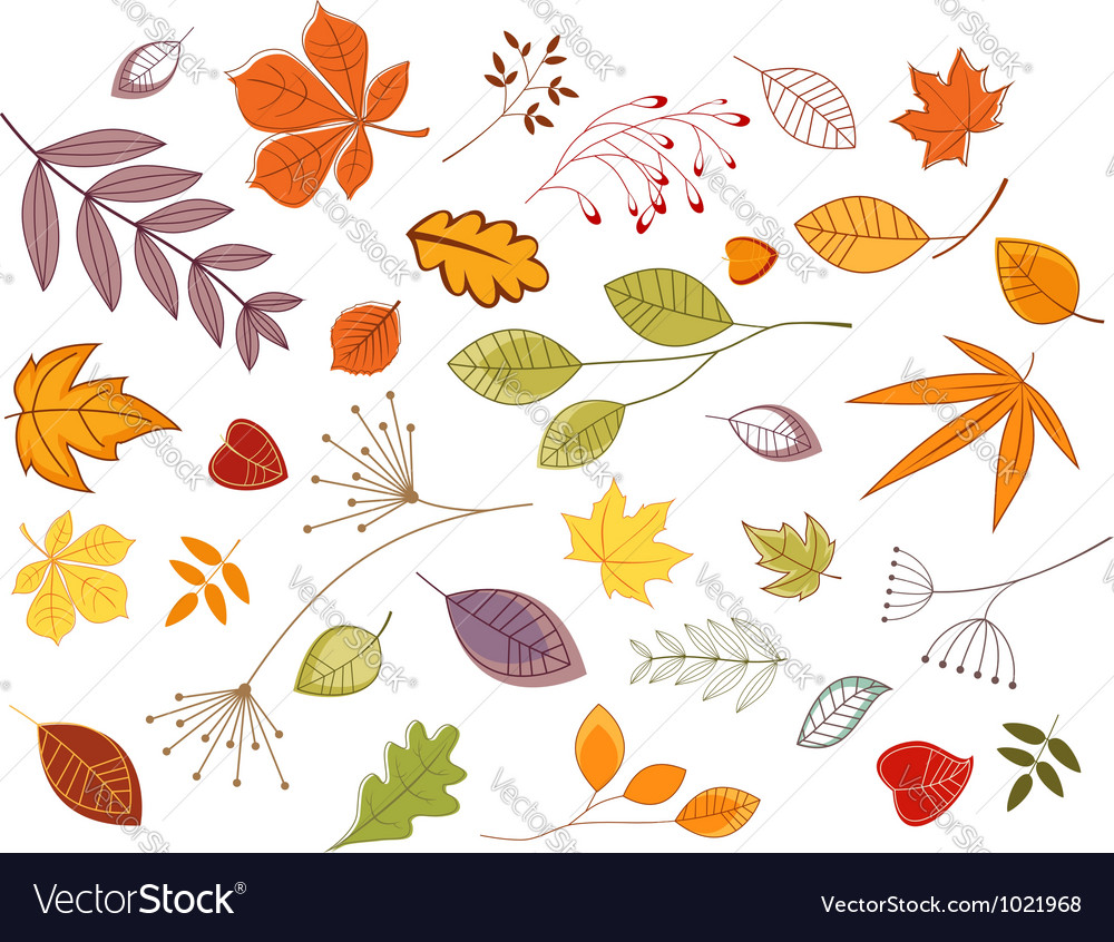Autumnal leaves and plants vector | Price: 1 Credit (USD $1)