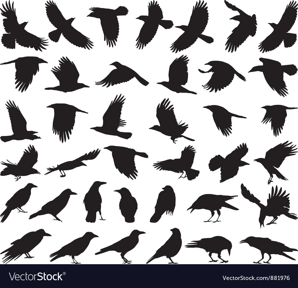 Bird carrion crow vector | Price: 1 Credit (USD $1)
