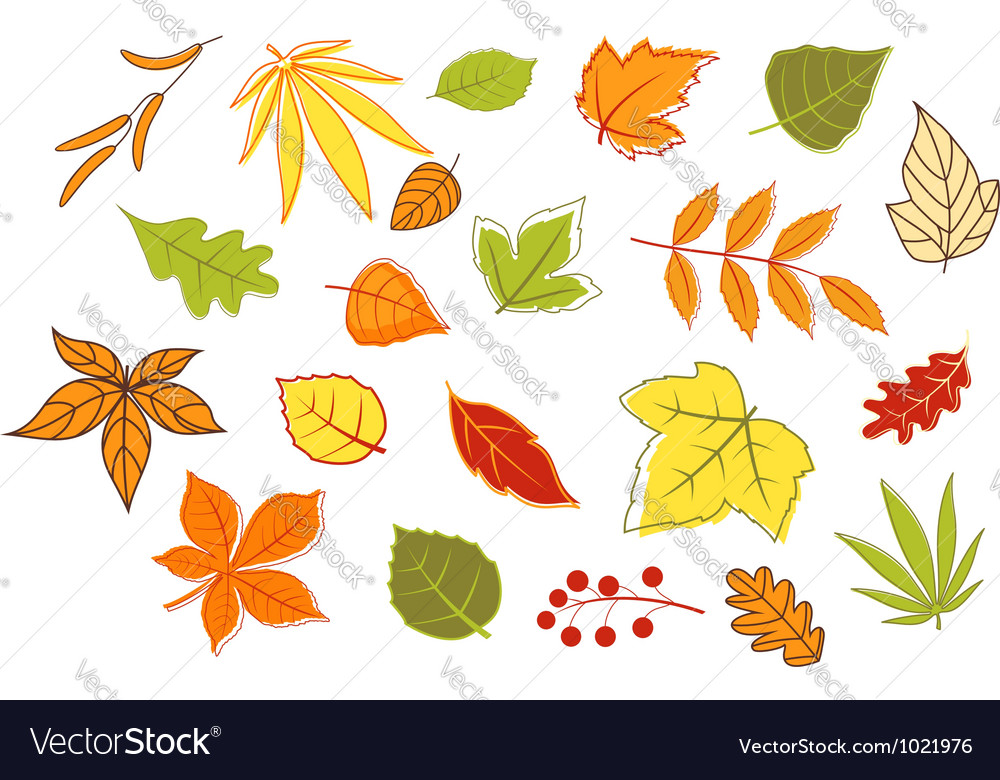 Colorful autumnal leaves and plants set vector | Price: 1 Credit (USD $1)
