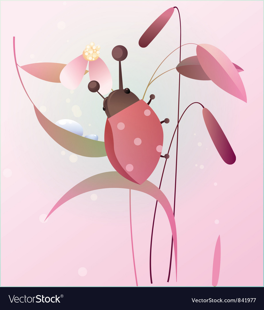 Ladybird on a flower vector | Price: 1 Credit (USD $1)