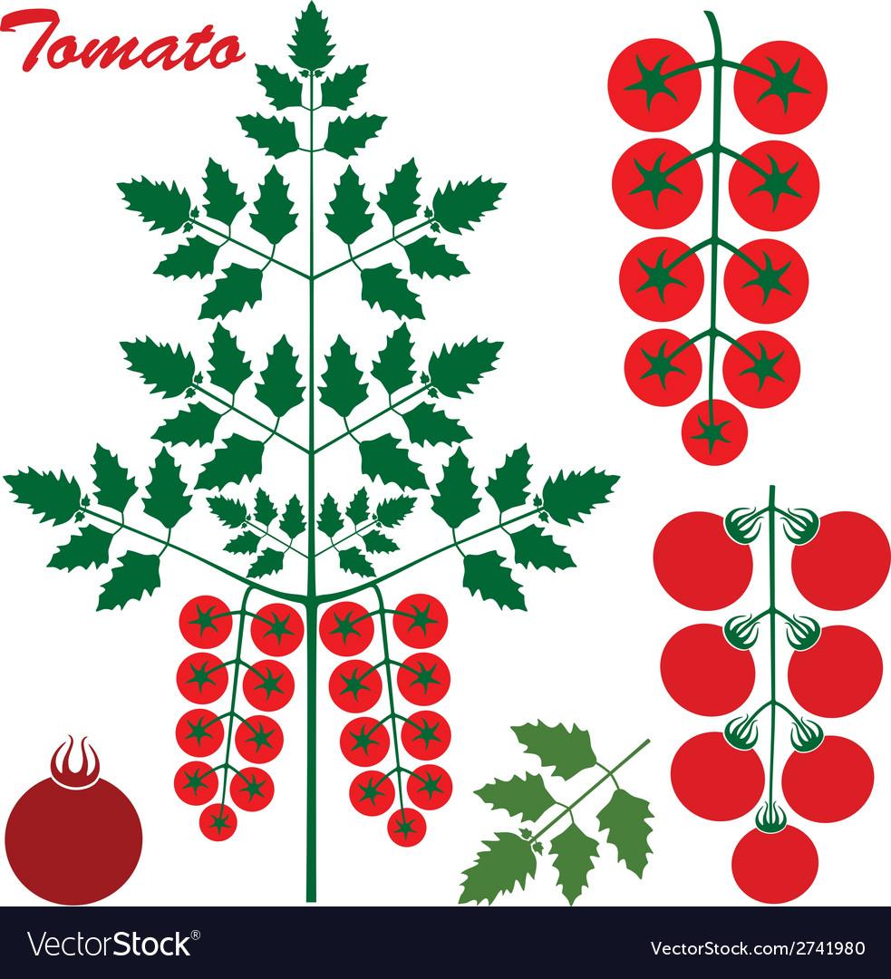 Tomato cherry vector | Price: 1 Credit (USD $1)