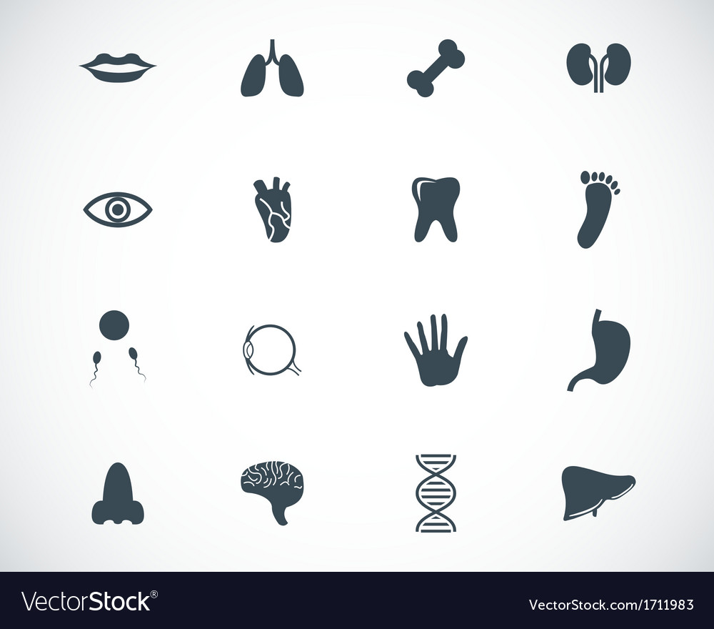 Black anatomy icons set vector | Price: 1 Credit (USD $1)