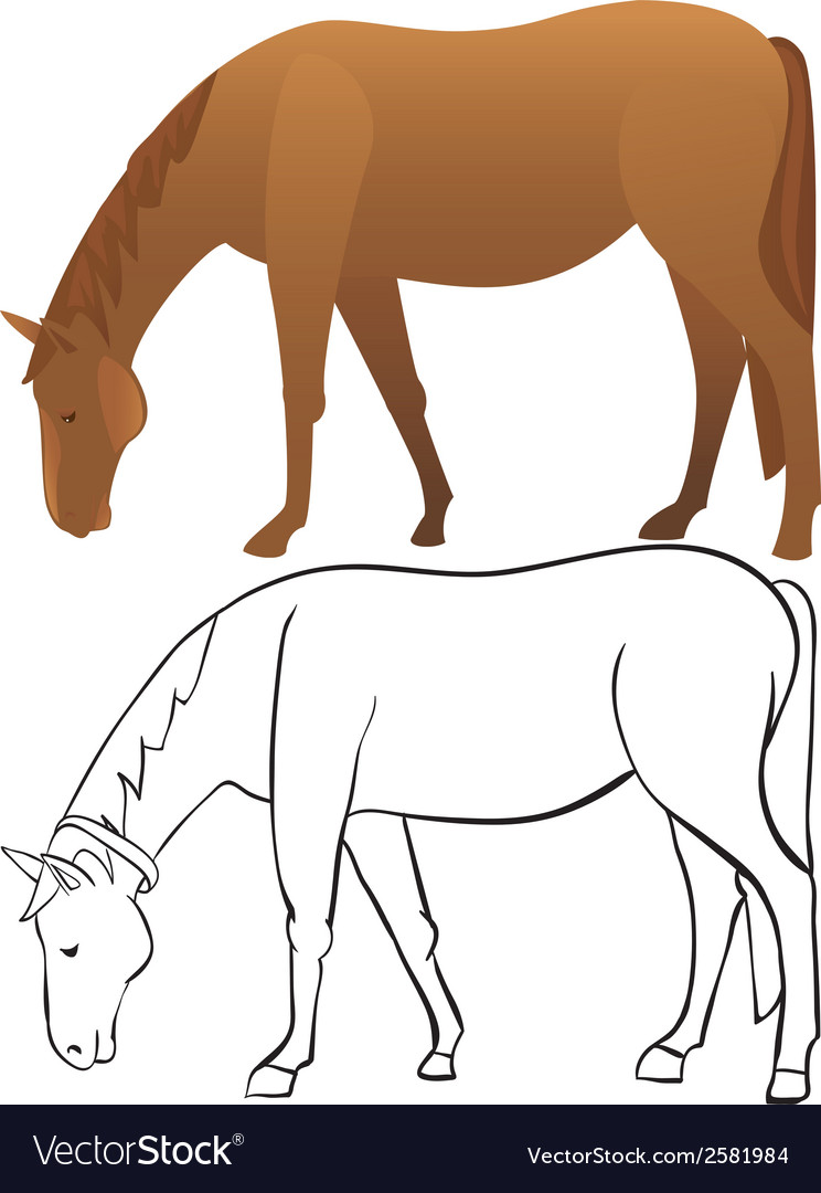 Horse outline and color vector | Price: 1 Credit (USD $1)