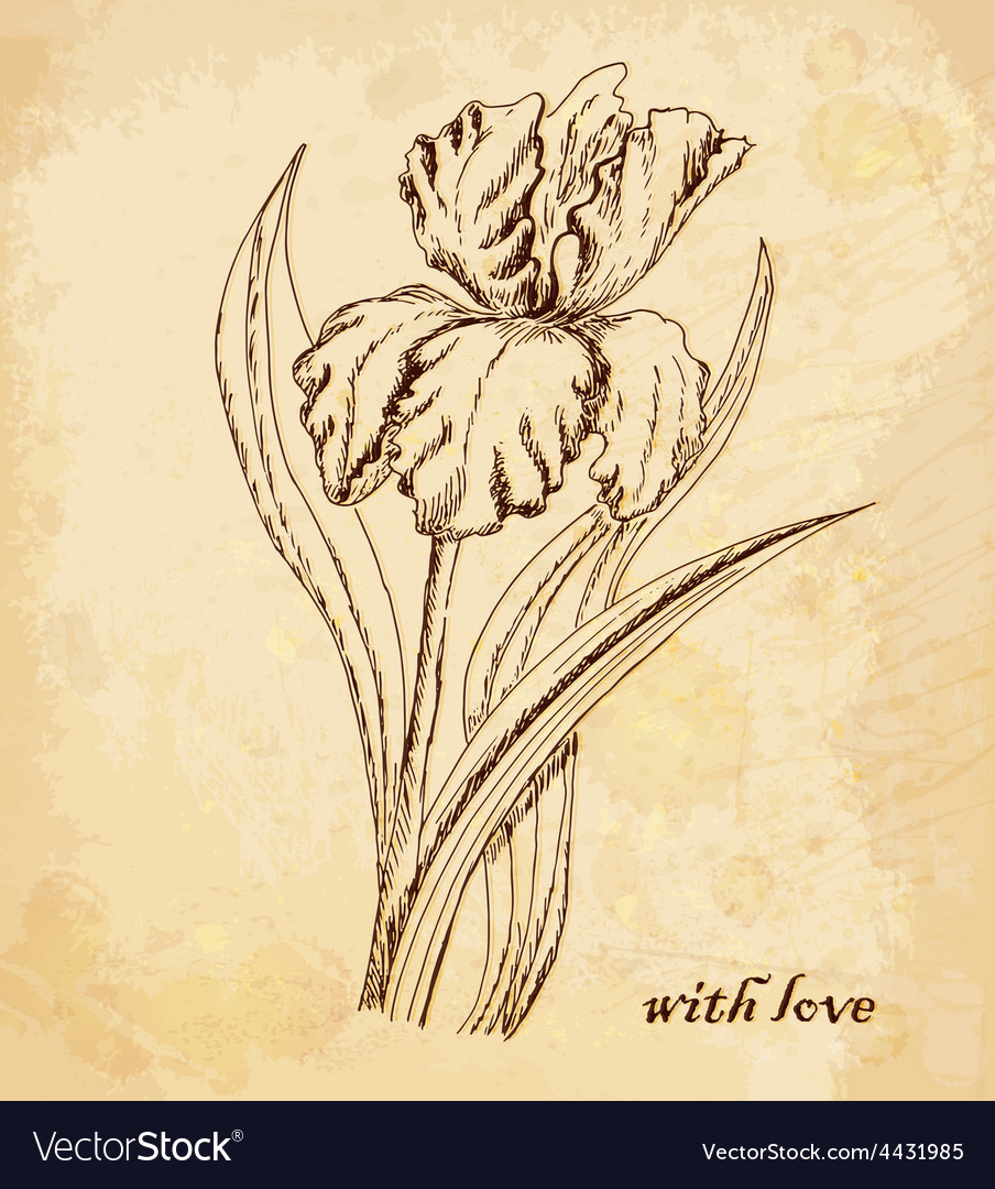 Vintage old background with iris with love hand vector | Price: 1 Credit (USD $1)