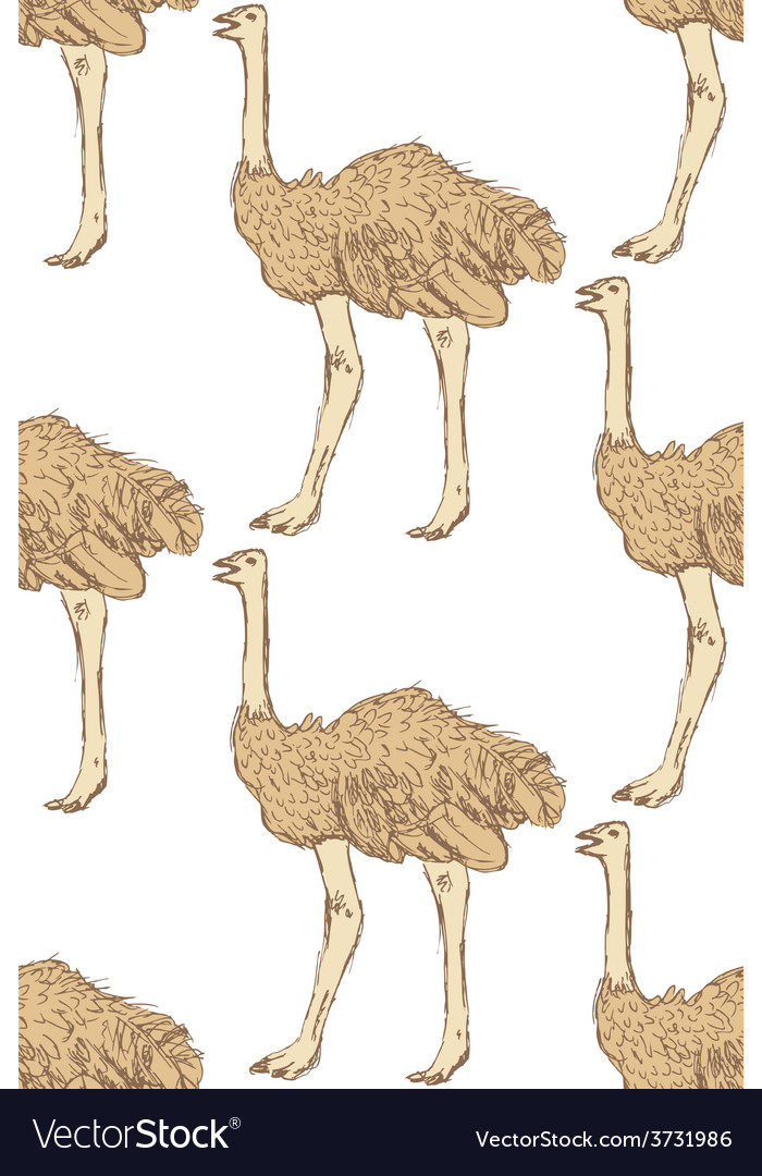 Sketch cute ostrich in vintage style vector | Price: 1 Credit (USD $1)