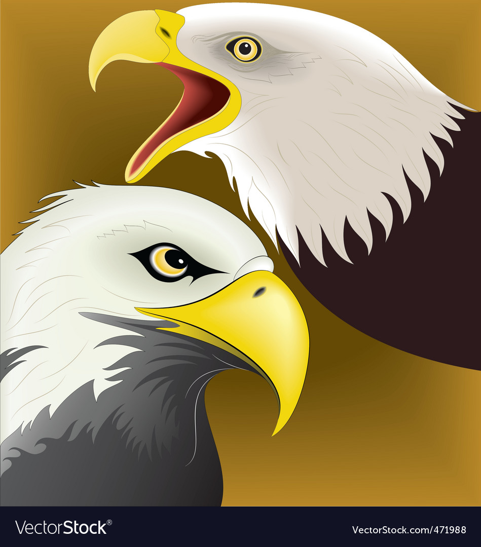 Eagle face vector | Price: 1 Credit (USD $1)
