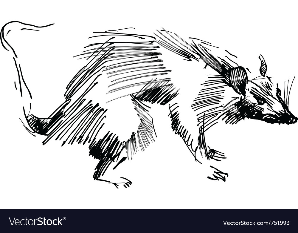 Rat hand drawing black and white sketch vector | Price: 1 Credit (USD $1)