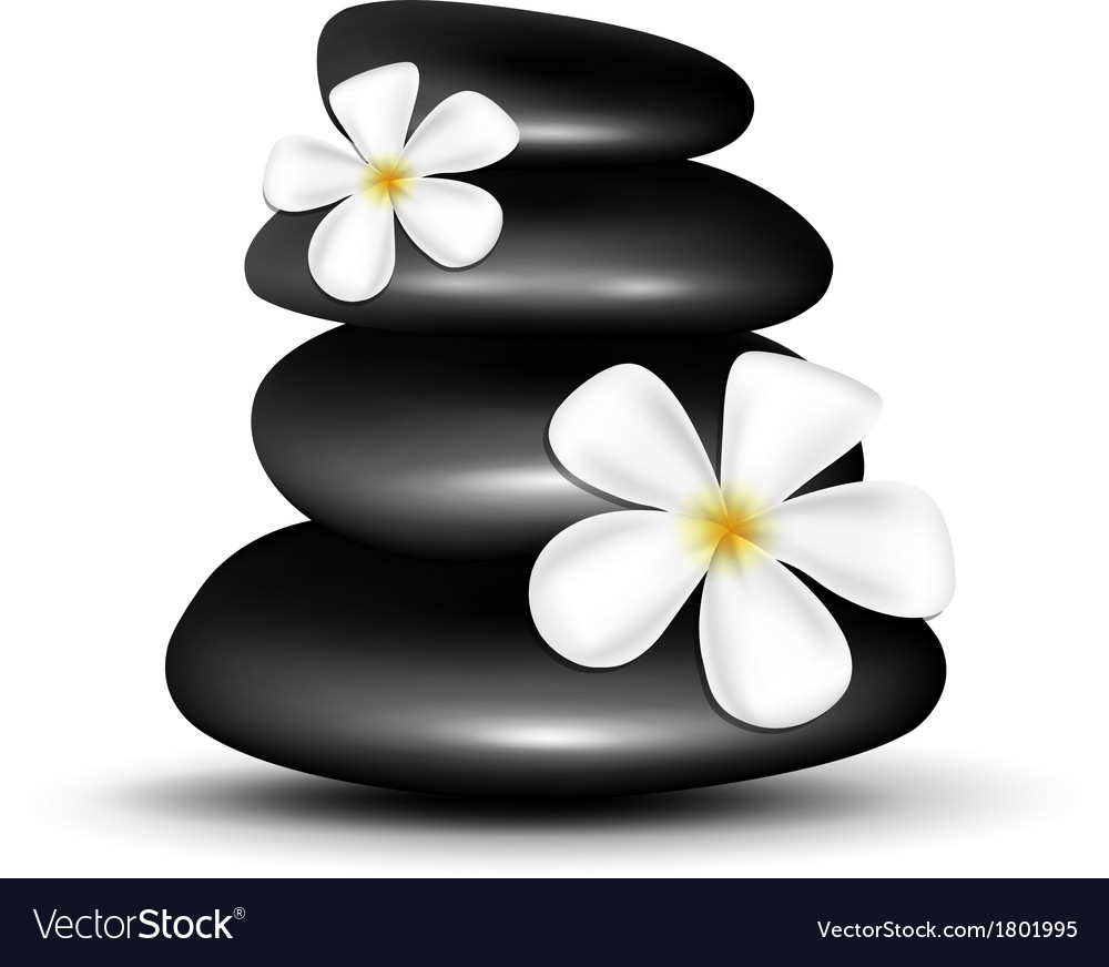 Spa stones with white flowers vector   Price: 1 Credit (USD $1)