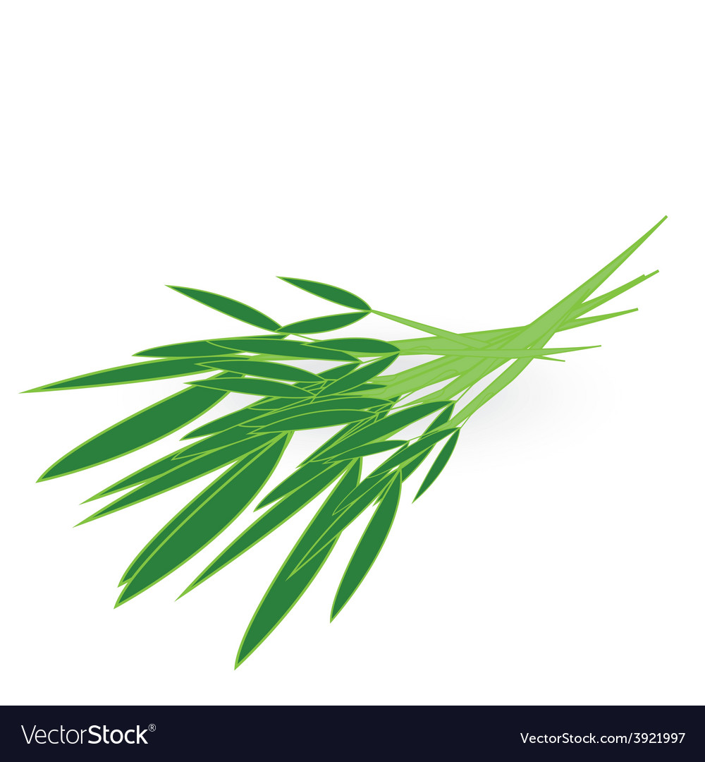 Chinese kangkong isolated on white background vector | Price: 1 Credit (USD $1)