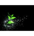 Green sprout in broken glass vector