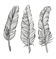 Feathers set hand drawn llustration vector